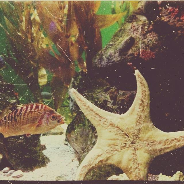 Image Result For Baltimore Aquarium Hours