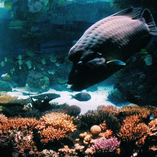 Aquarium's Instameet