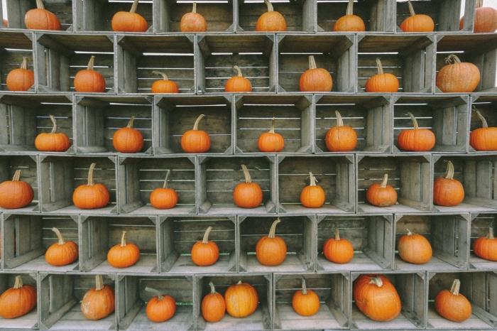 Pumpkins on pumpkins