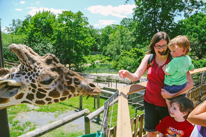 Baltimore, MD -- May 25, 2014 -- Christina Covey and Ronan Covey, 2, feed Caesar the giraffe at the Brew at The Zoo event this past weekend. (Kaitlin Newman/Baltimore Sun)