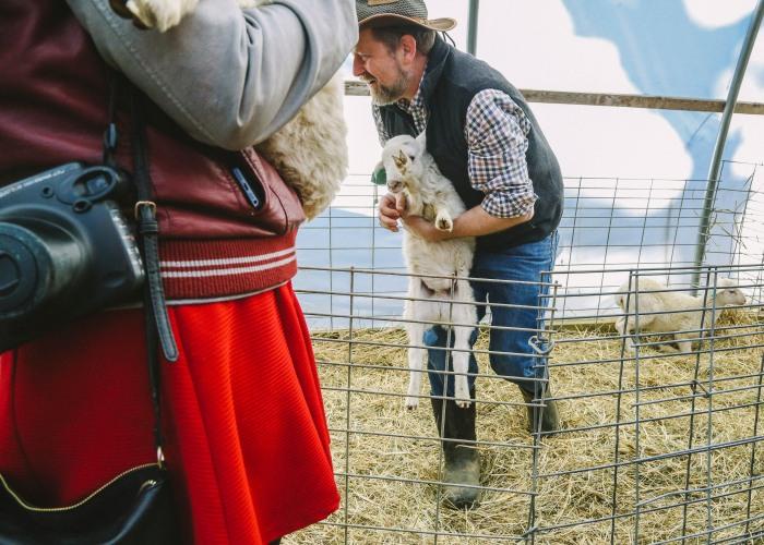 lamb29